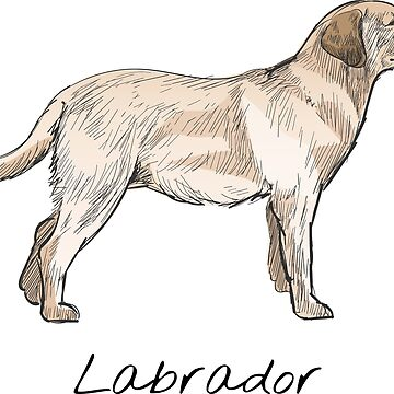 Labrador Vintage Style Drawing by efomylod