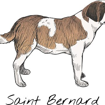 Saint Bernard Vintage Style Drawing by efomylod