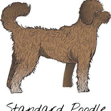 Standard Poodle Vintage Style Drawing by efomylod
