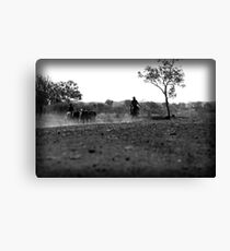 Horse muster Canvas Print