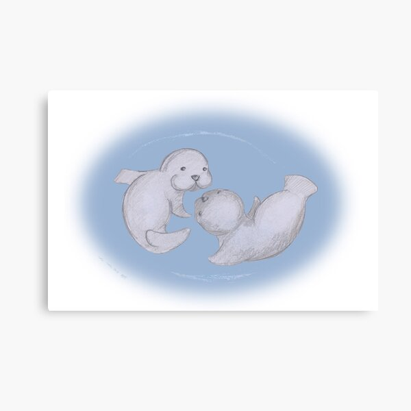 Baby Seals Canvas Print