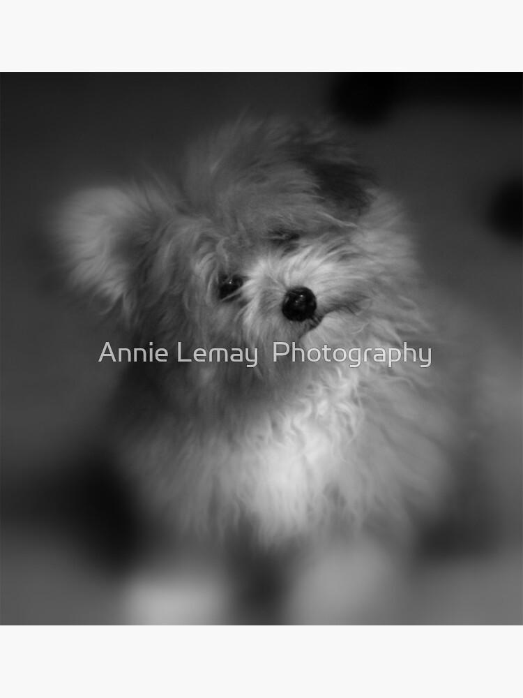 I Love You by ajlphotography