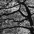 The oak by yanshee
