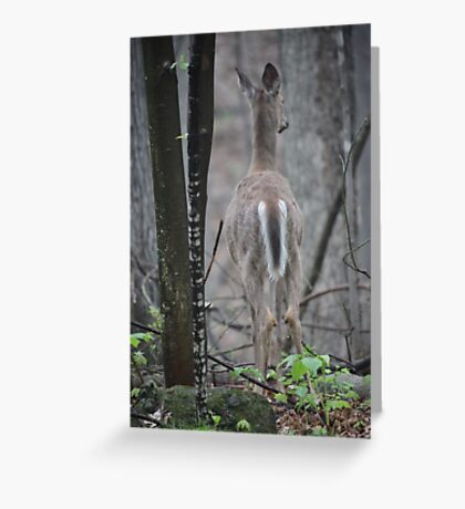 Deer Looks in Ravine Greeting Card