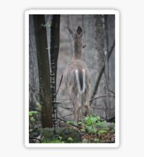Deer Looks in Ravine Sticker