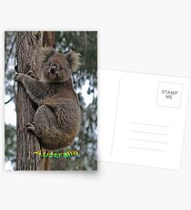 Koala climbing Eucalypt Tree Postcards