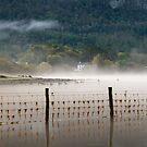 Mist at dawn by Jon Tait