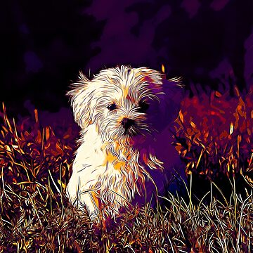 gxp maltese dog vector art late sunset by gxp-design