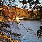 Autumn Leaves by daniellesalmon