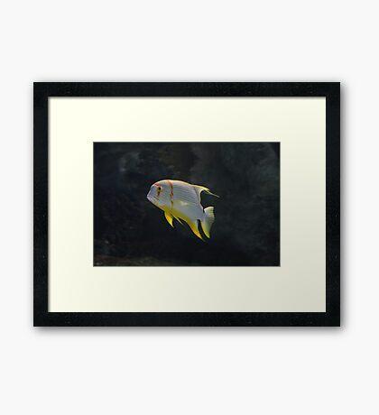 School Of One Framed Print