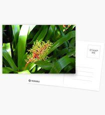 Tropical Fauna Postcards