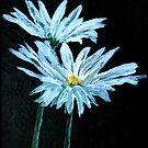 oil painting of daisy flowers by derekmccrea