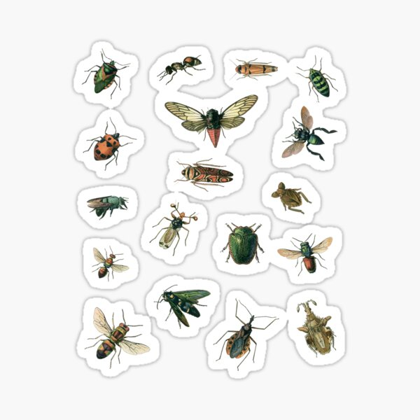 Insect stickers sheet Sticker