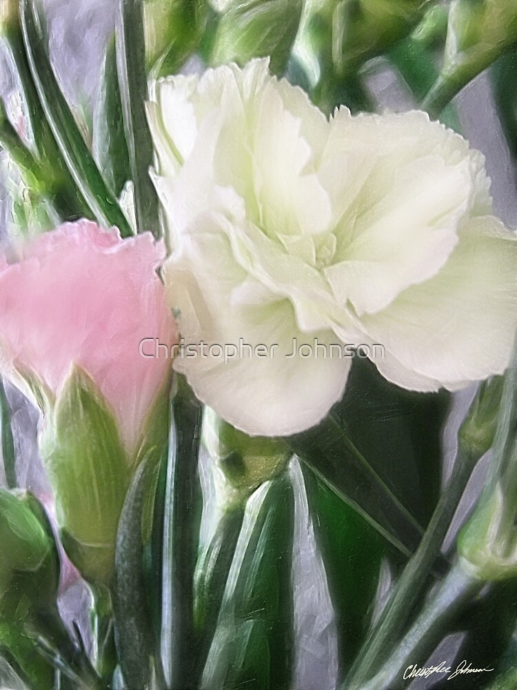 Pink and White Carnations 2 by Christopher Johnson