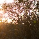 Evening by aljen01