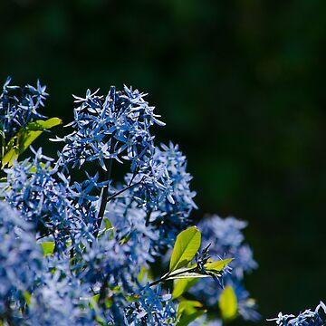 Blue purple flower by photosbygemmad