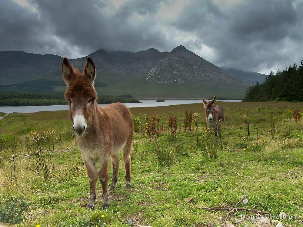 Donkey by Damien O'Halloran