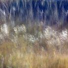 Dancing Grasses by A.M. Ruttle