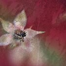 Rose seedhead by Patriciakb