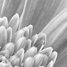 Gerbera Abstract by bnilesh