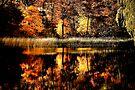 Autumn Gold  by Elaine Manley
