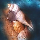 Shells on the Loose by Carolyn Staut