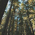 Enchanting Pacific Northwest by Eoxe