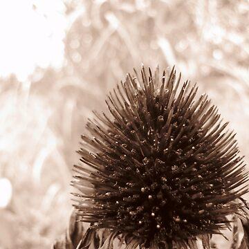 Season's End Sepia by cameraflash