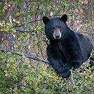 Beary bush by Eivor Kuchta