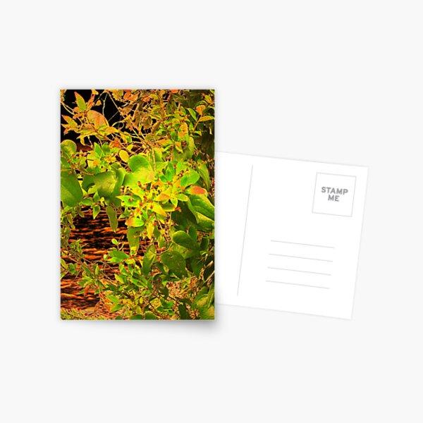 GLOW in the Bush Postcard