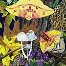 American Imperial Moth Pair by Jedro