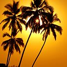 Palm Trees & sunrise by bnilesh