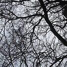 Tree banches By Miss K L Slomczynski KABFA by KABFA