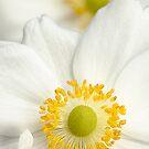 White Anemone by Beth Mason