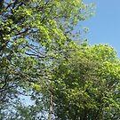 Green Tree tops By Miss K L Slomczynski KABFA by KABFA