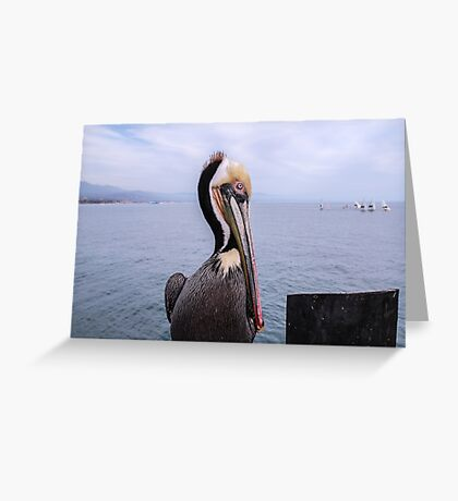 Pelecanus Thagus Greeting Card