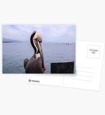 Pelecanus Thagus Postcards