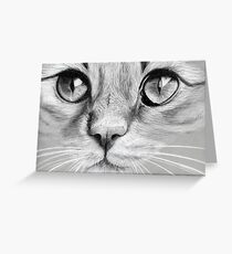 Kitty Greeting Card