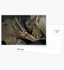 Zen 02 Postcards