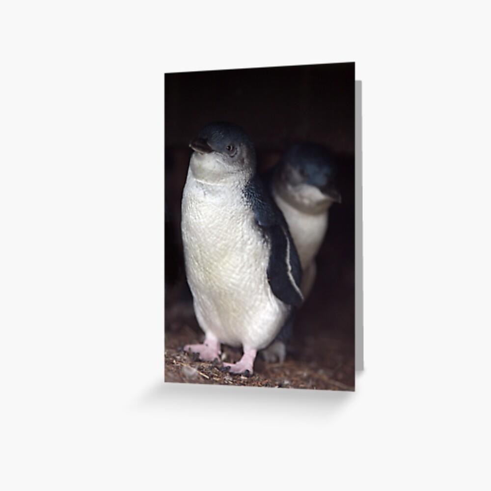 Australian Baby Penguin, Philip Island, Australia Greeting Card
