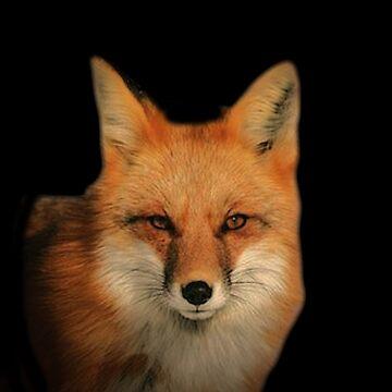 Fox Shirt by markstones