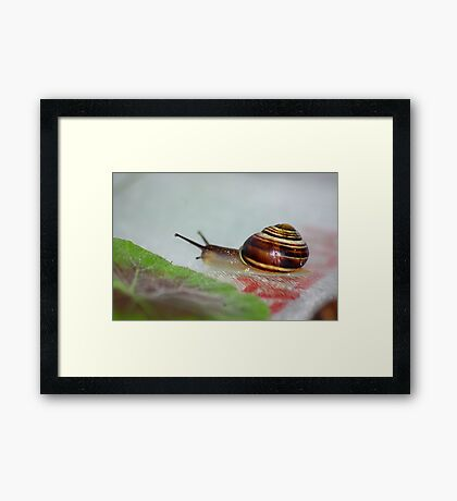 Slow Snail Framed Print