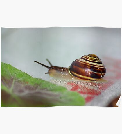 Slow Snail Poster