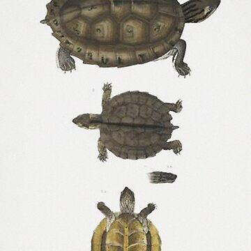 Tortoise illustration by Geekimpact