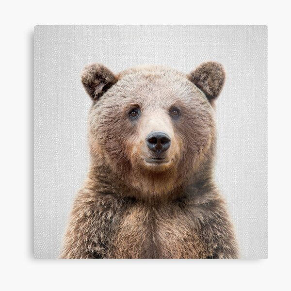 Grizzly Bear - Colorful Metal Print