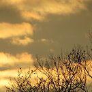 Yellow sunset by brendalynn52