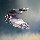 Great Blue Heron in Flight by Kathy Weaver