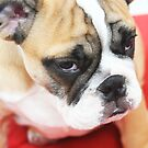 sad bad mood bulldog dog by momarch