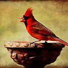 Cardinal by Jonicool