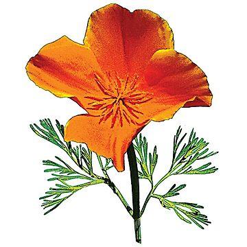 Orange California Poppy by SudaP0408